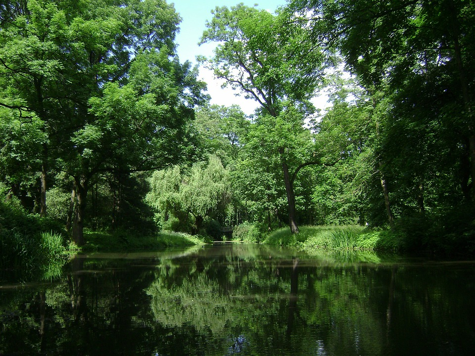 Warsaw, Poland, Park, Forest, Trees, Woods, Lake, Pond