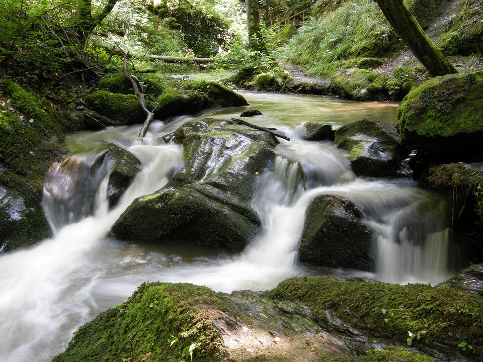 Nature, Forest, Water, Bach, Mood, Stones