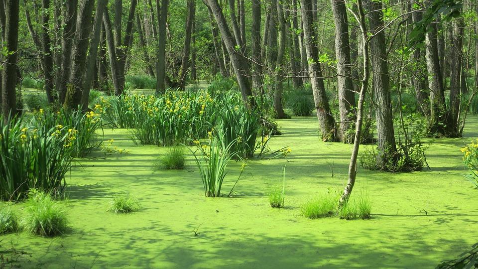 Moor, Island, Water, Forest, Baltic Sea, Usedom