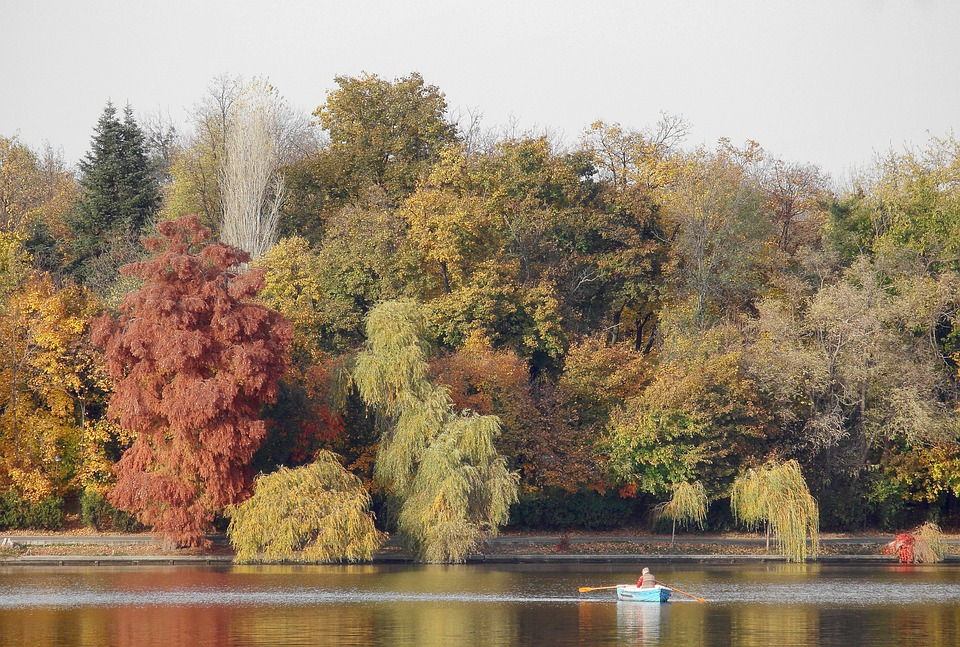 Autumn, Trees, Lake, Forest, Landscape, Nature, Water