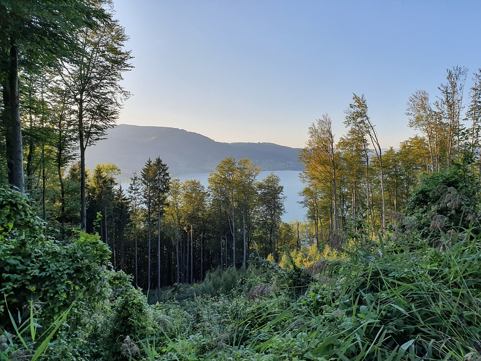 Trees, Lake, Forest, Water, Nature, Mountains