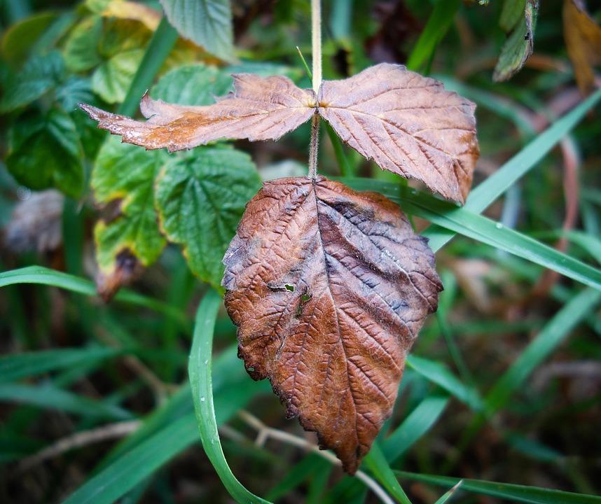 Leaf, Brown Leaf, Moist, Wet, Rain, Forest, Shiny