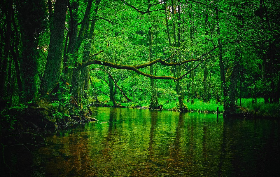 Forest, River, Nature, Tree, Wild, Scenery, Green