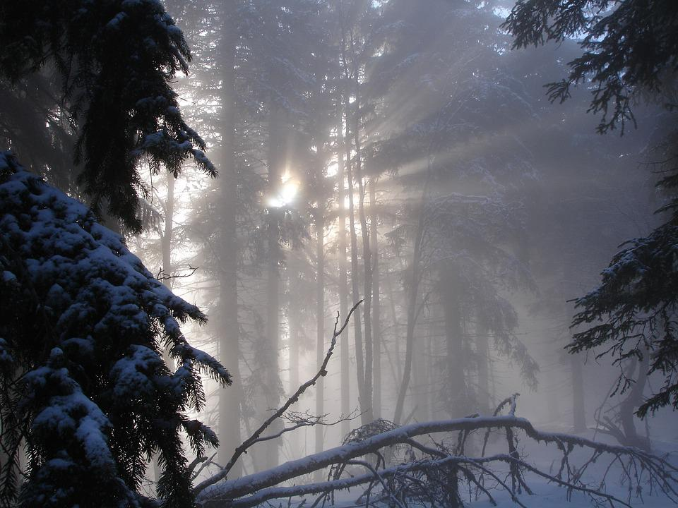 Forest, Nature, Winter