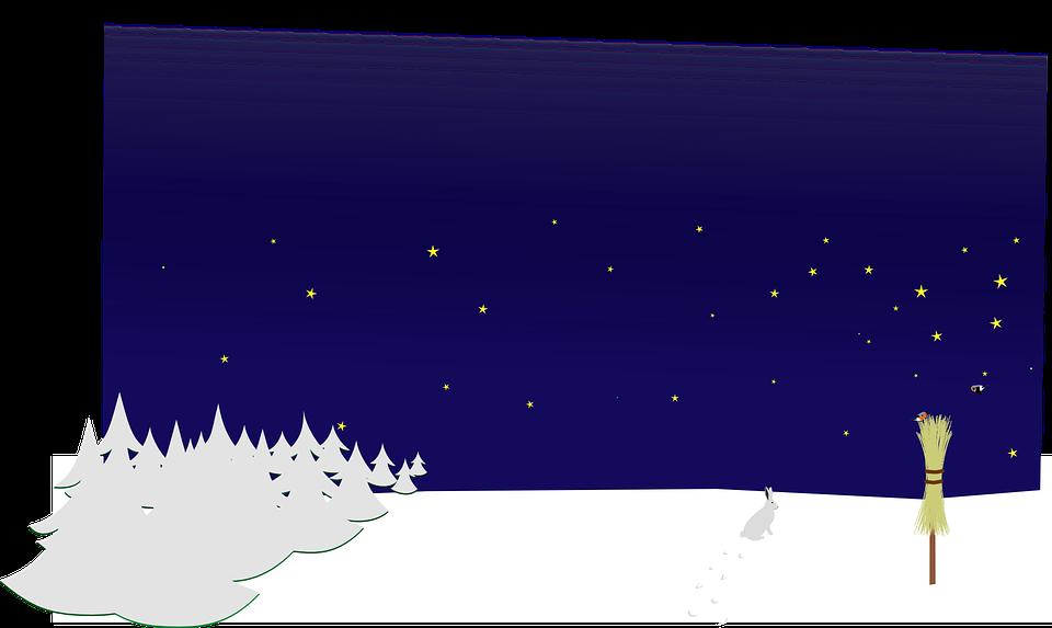 Night, Winter, Forest, Trees, Broom, Hare, Rabbit
