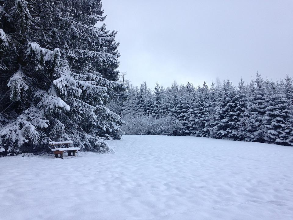 Snow, Wintry, Forest, Snowy, Mountains