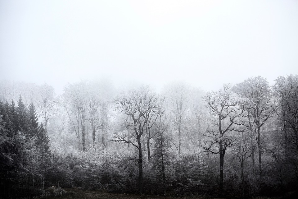 Winter, Forest, Frozen, Snow, Wintry, White, Ice