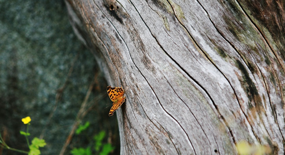 Tree, Tree Trunk, Wood, Forest, Butterfly, Insect, Wing