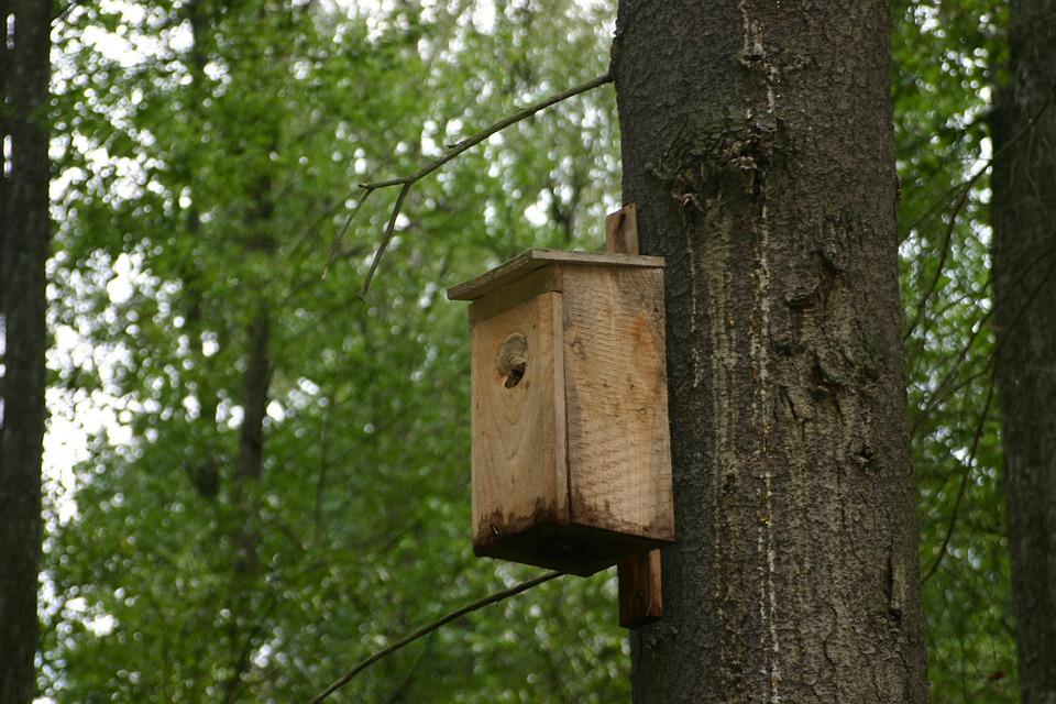 Bird Feeding Tray, Tree, Forest, Bird, Wood
