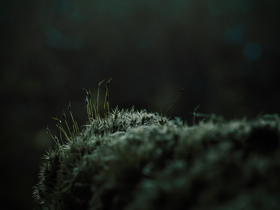 Moss, Vegetation, Forest, Branch, Tree, Wood, Nature