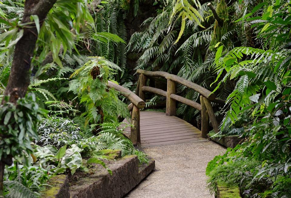 Boardwalk, Wooden Bridge, Web, Transition, Forest