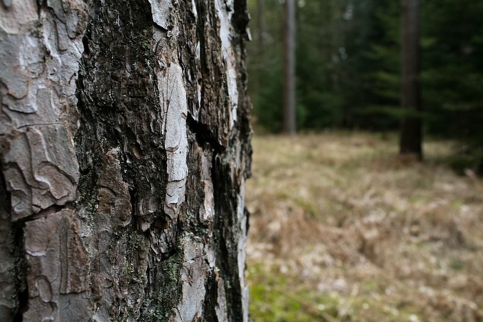 Bark, Tree, Forest, Wood, Woodland, Green