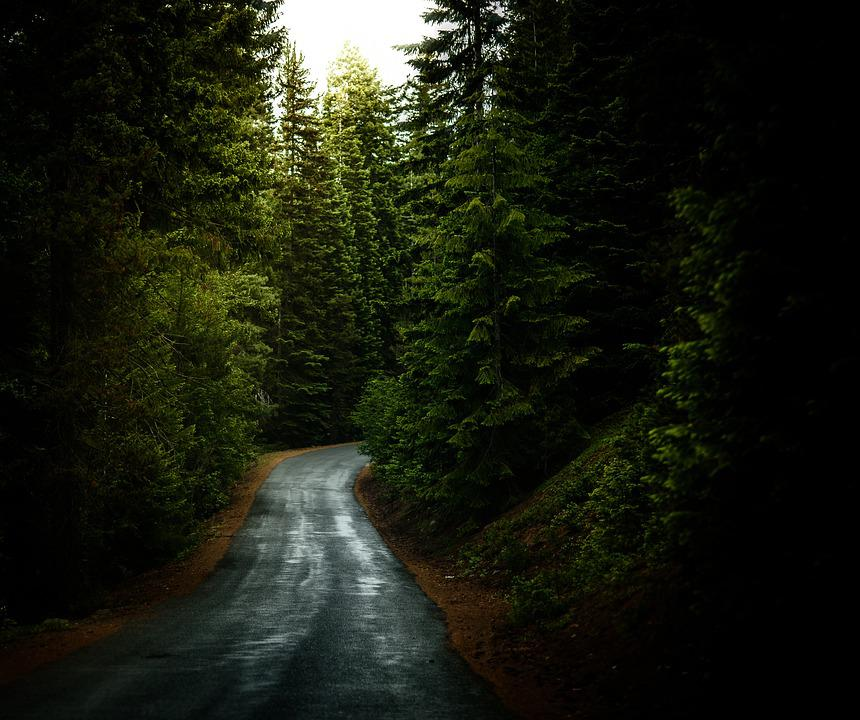 Forest, Road, Travel, Trees, Woods