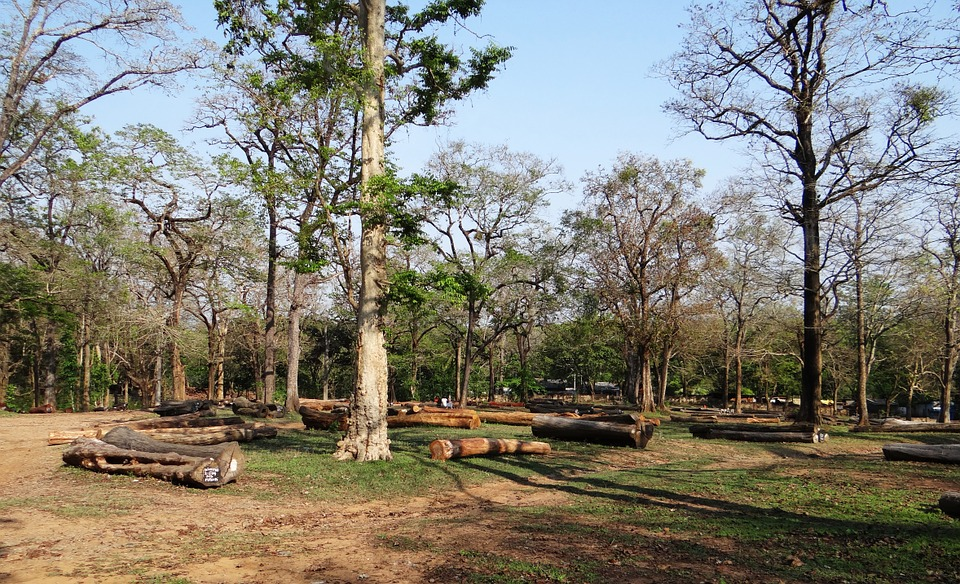 Logging, Forestry, Wood, Timber, Log, Forest, Pile