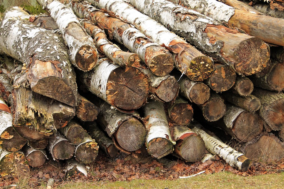 Cut The Logs, Stacked, Birch, Forestry Work