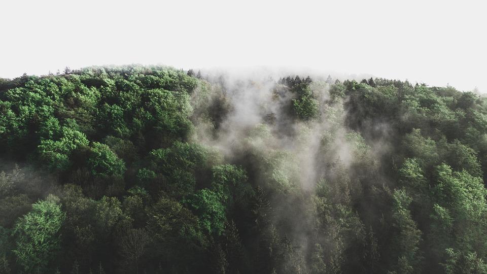 Forest, Trees, Drone, Fog, Landscape, Forests, Nature