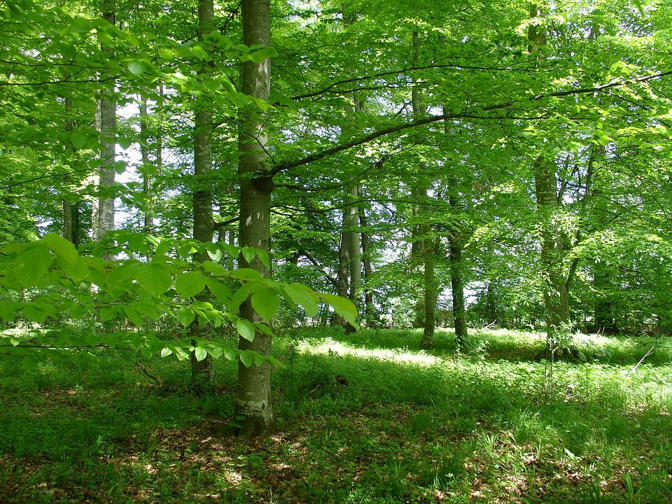 Forest, Nature Park, Nature, Forests, Hiking, Tree