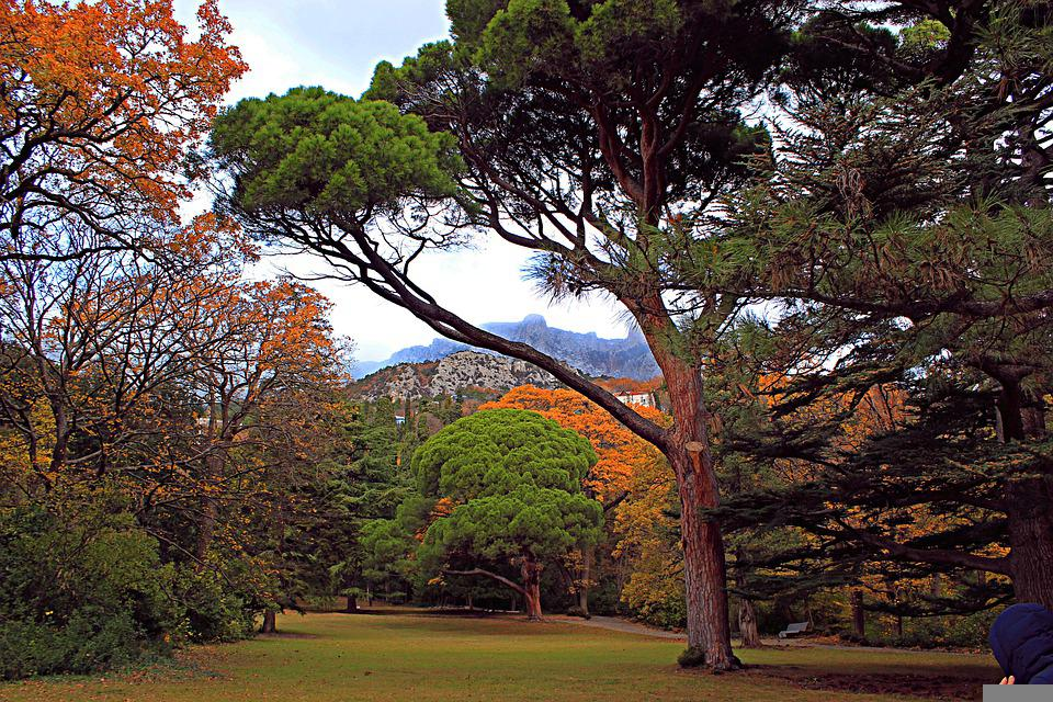 Tree, Autumn, Nature, Trees, Forests, Landscape