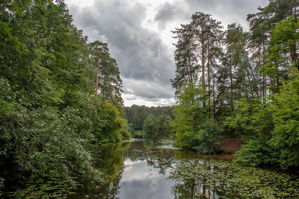 Silver Forest, Forest, Park, Forests, Landscape, Nature