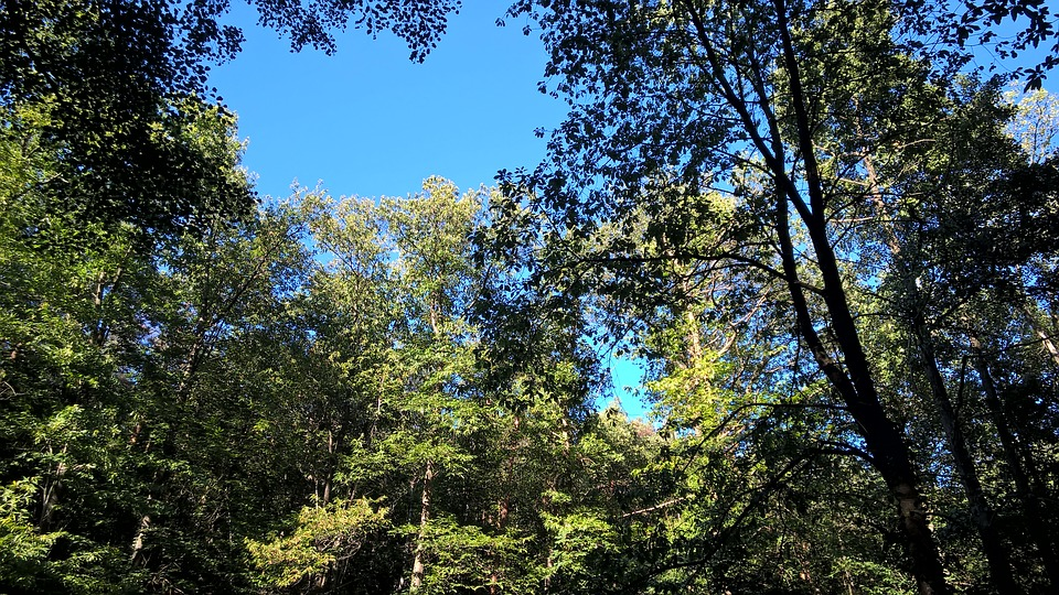 Forest, Trees, Nature, Forests, Sunlight, Leaves