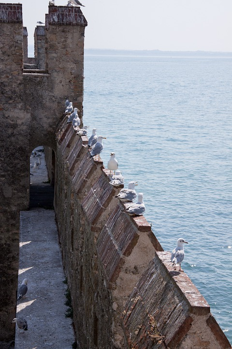 Loopholes, Battlements, Gulls, Castle, Fortress