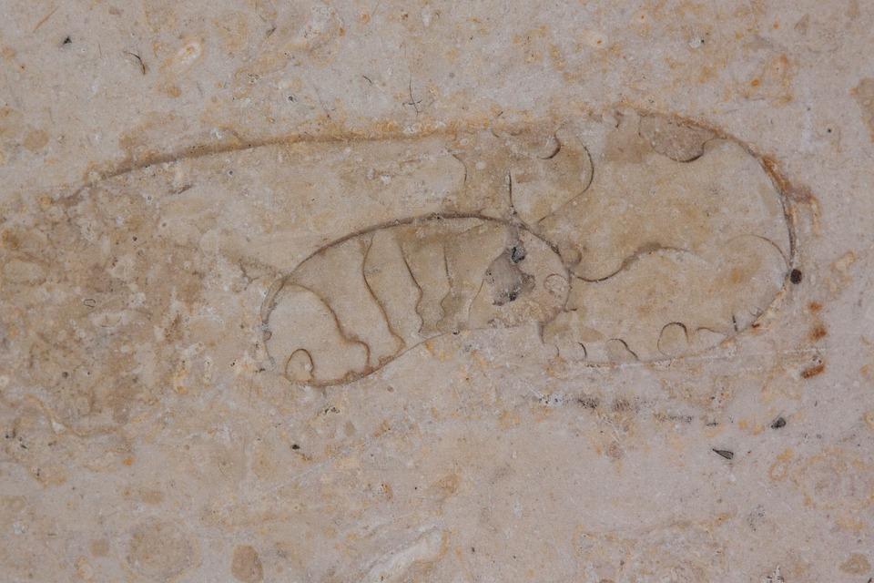 Petrification, Fossil Beast, Fossil