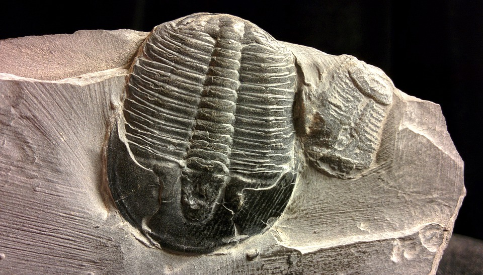 Fossil, Trilobites, Collectibles, Natural Sciences