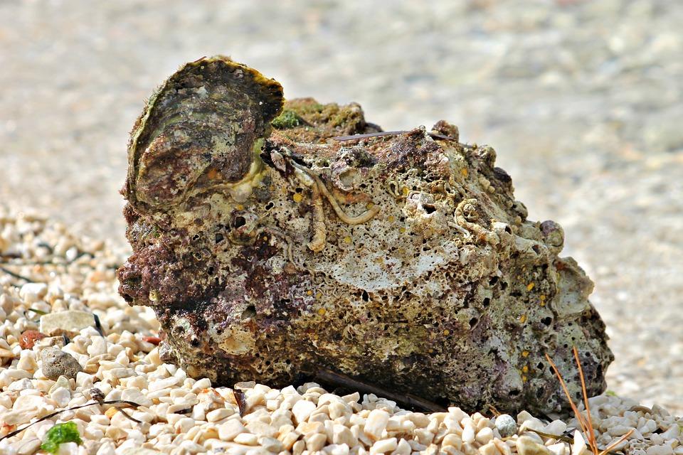 Beach, Stone, Gravel, Kövesedés, Fossil, Waterfront