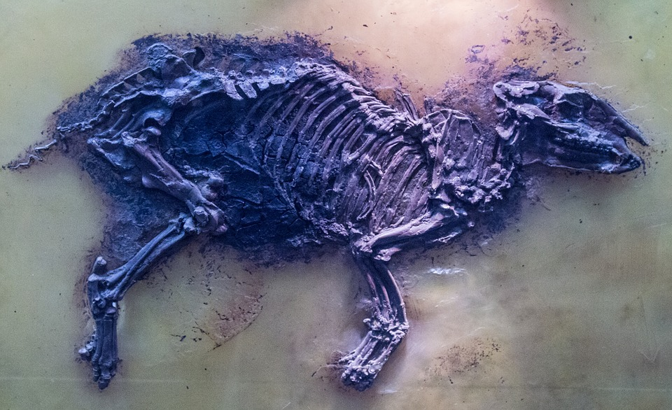Urtier, Fossils, Fossil, Prehistoric Times, Ancient