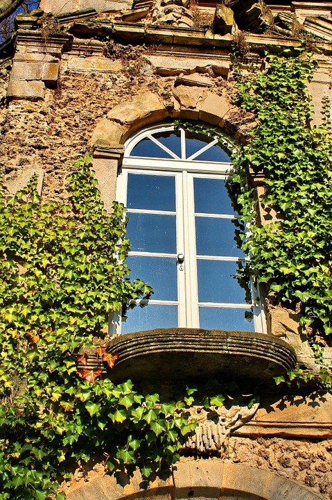 Window, Ivy, Wall, Romantic, Facade, Fouling, Climber