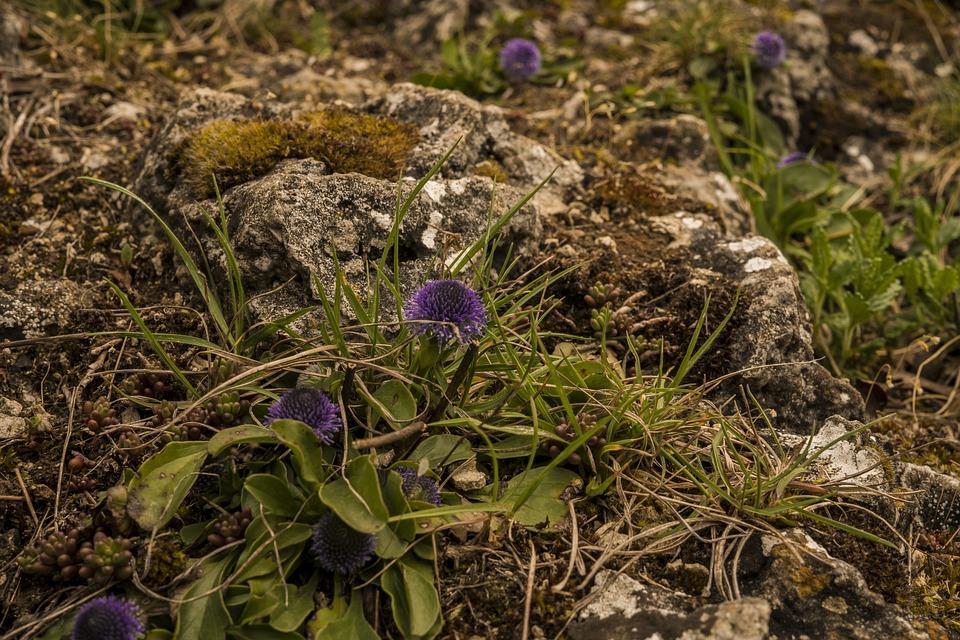 Rock, Fouling, Stone, Nature, Moss, Rock Lichen