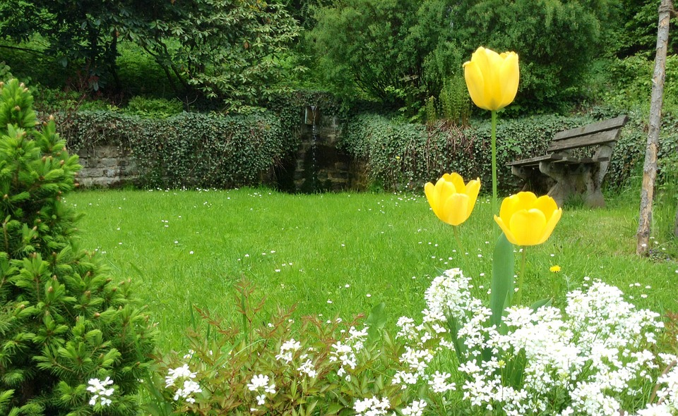 Tulips, Yellow, Flowers, Garden, Fountain