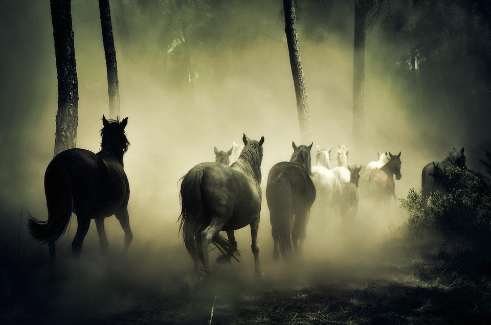 Horses, Animals, Nature, Four Legged, Herd Of Horses