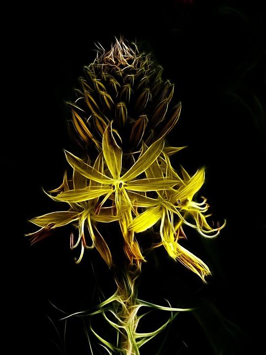 Fractalius, Photo Art, Junker Lily, Yellow Flower
