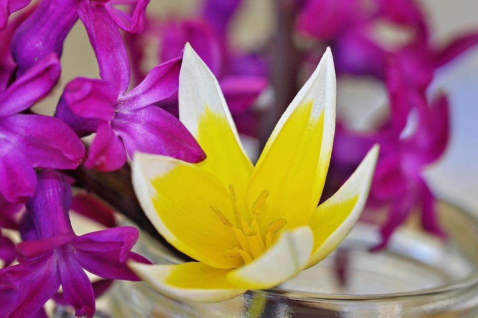Hyacinth, Flower, Spring Flower, Fragrant, Flowers