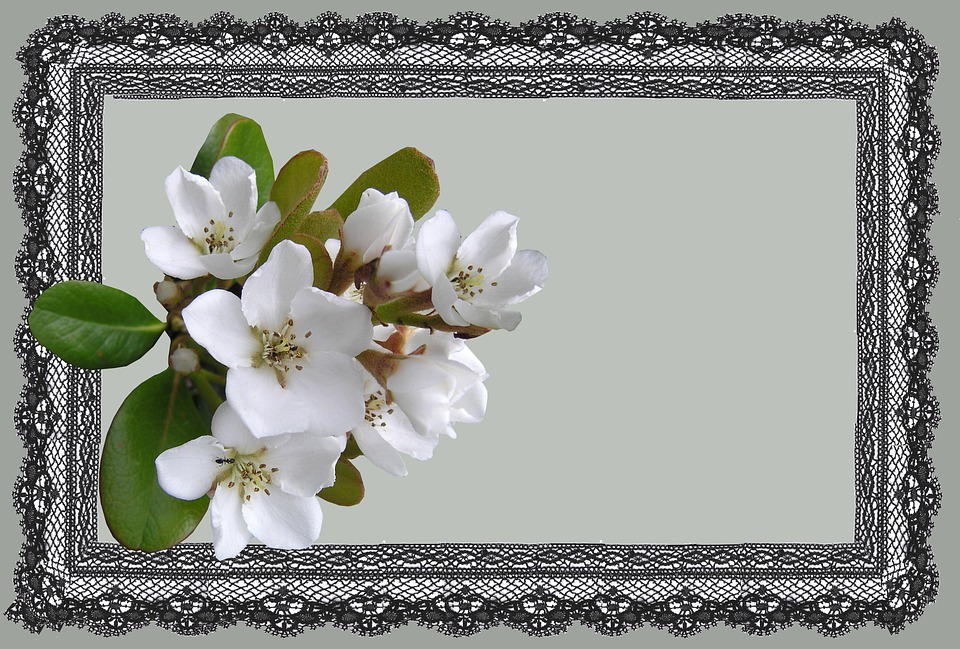 Greeting Card, White, Flower, Lace, Frame