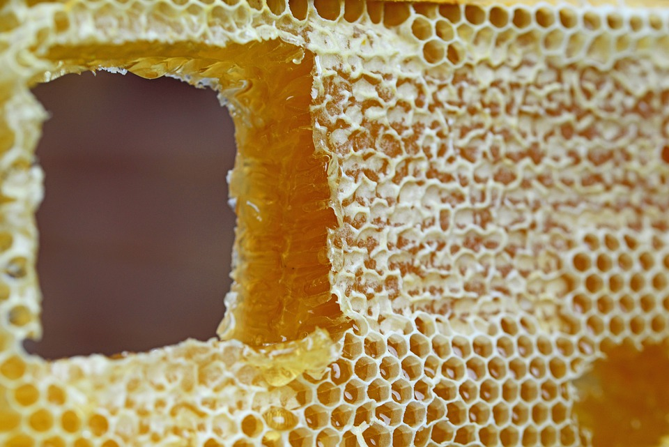 Honeycomb, Comb, Honey, Wax Cells, Frame, Hive, Cells