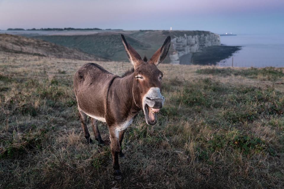 Etretat, Donkey, France, Animal, Tourism, Normandy