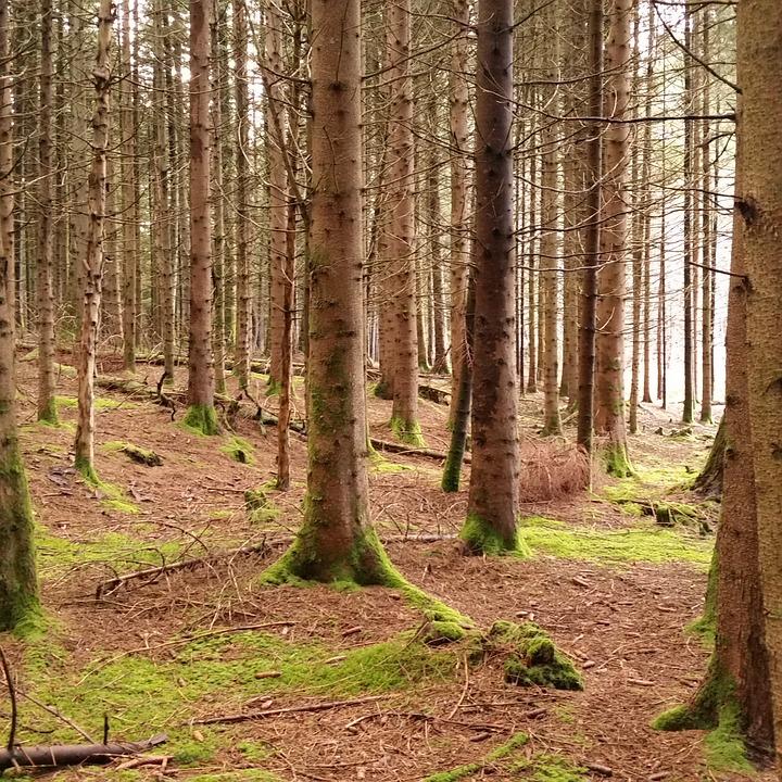 Forest, Wood, Light, Auvergne, France