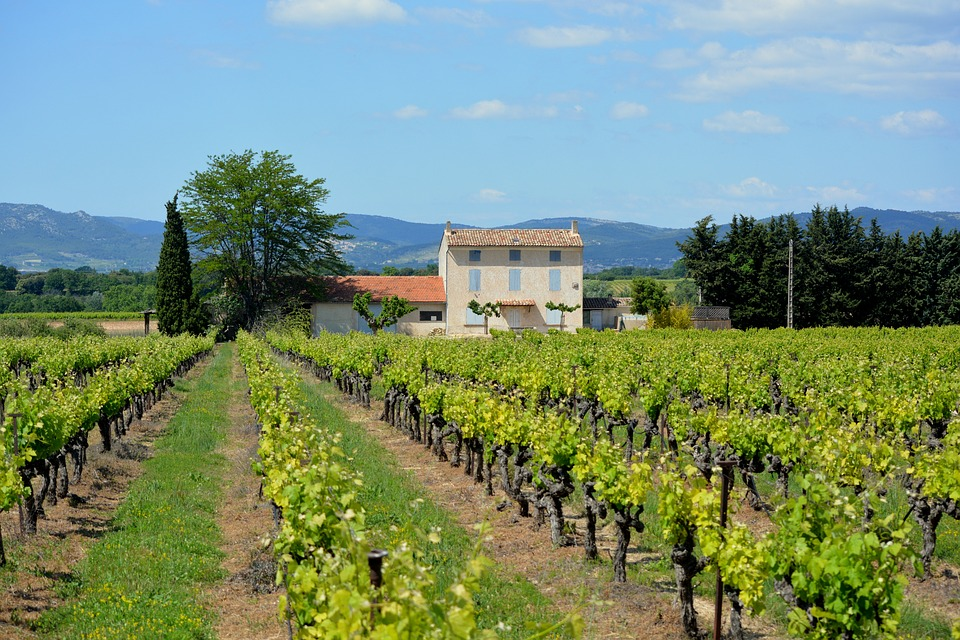 House, Holiday, France, Vineyard, Landscape, View