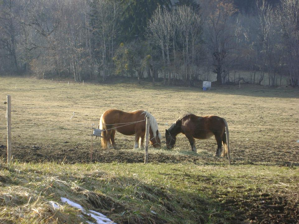 Horses, France, Wild