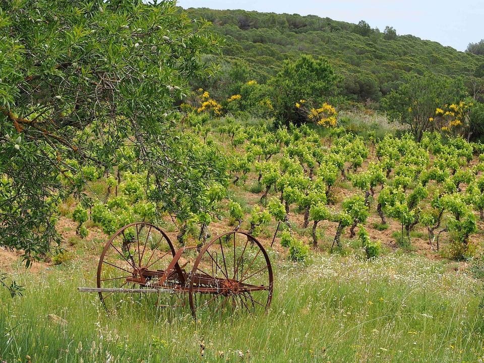 Landscape, Vine, Nature, Fields, Wine, France, Grape