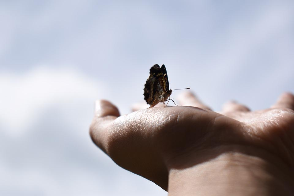 Butterfly, Hand, Insect, Sky, Freedom, Animal, Bug, Fly
