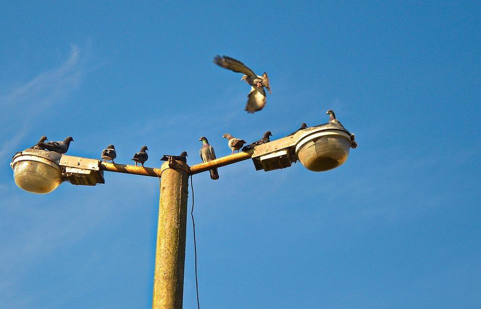Pigeons, Flying, Birds, Sky, Air, Wings, Freedom