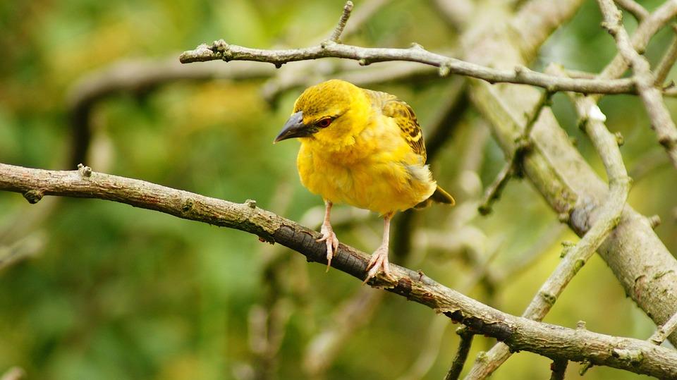 Bird, Feathers, Yellow, Beak, Branches, Flight, Freedom