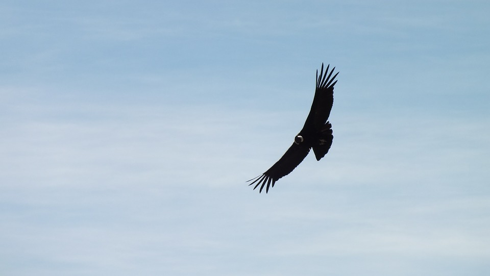 Condor, Peru, Fly, Sky, Clouds, Landscape, Freedom