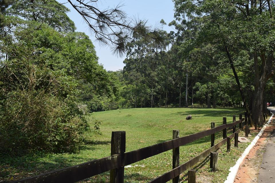 Duck, Birds, Ecology, Freedom, Rural Zone, Park