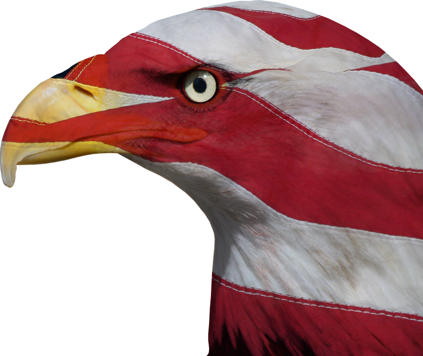 Usa, United States, Freedom, Bald Eagle, Patriotic