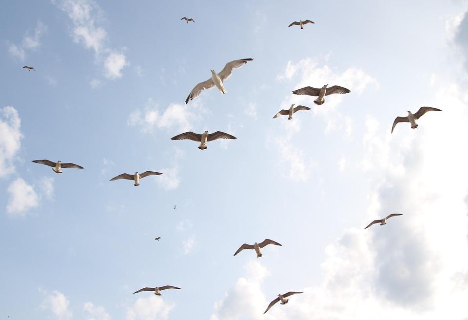 Seagulls, Flight, Birds, Sky, Freedom, Nature, Wings