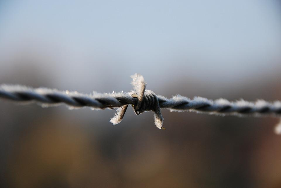 Barbed Wire, Winter, Ripe, Freeze, Cold
